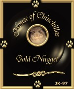 The House of Chinchillas Gold Nugget